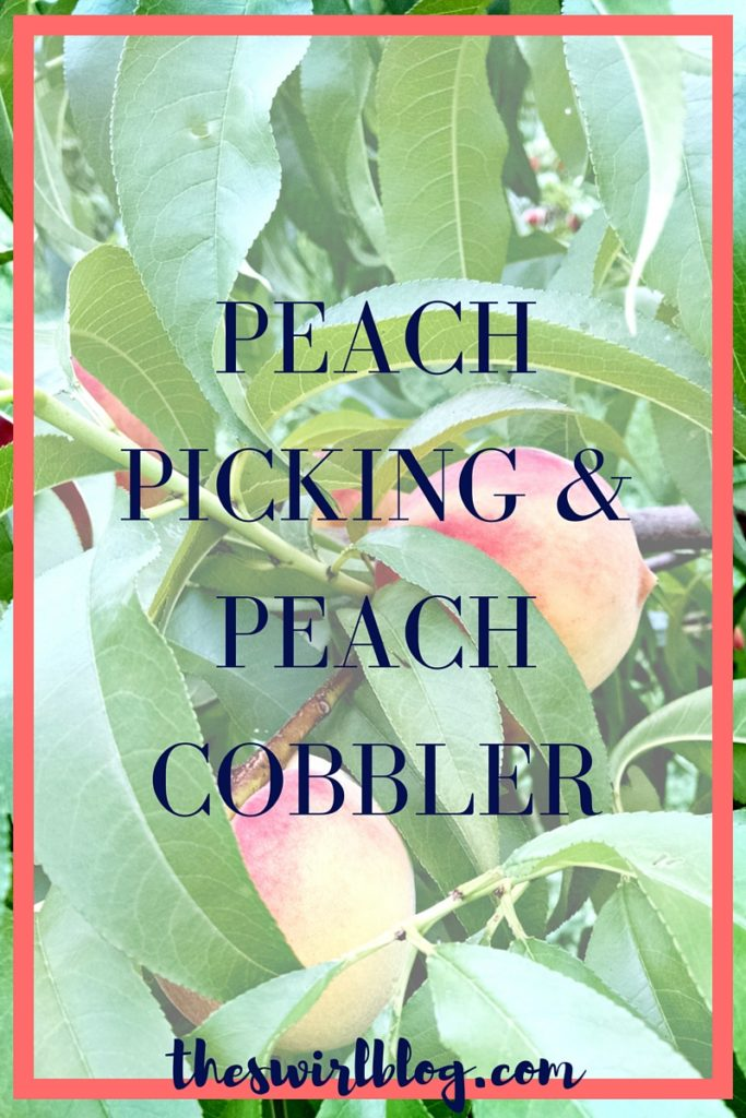 Peach Picking and Peach Cobbler Recipe